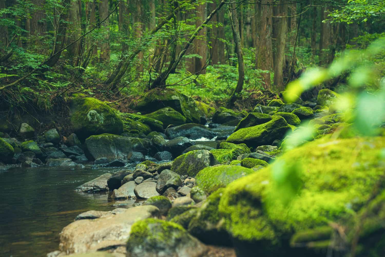 森林の中の川