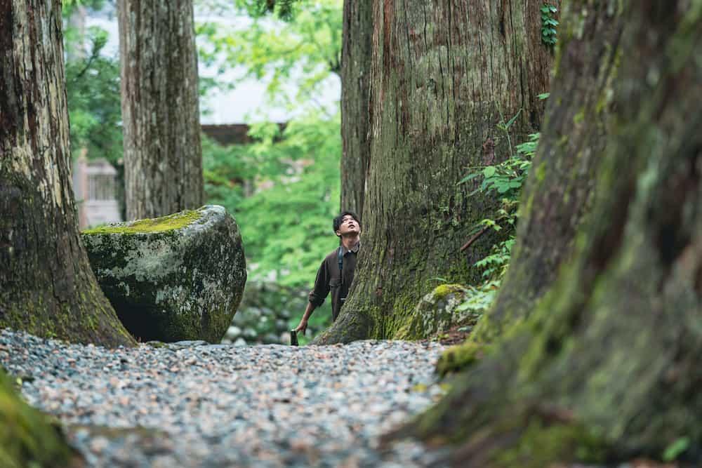 大木の谷間